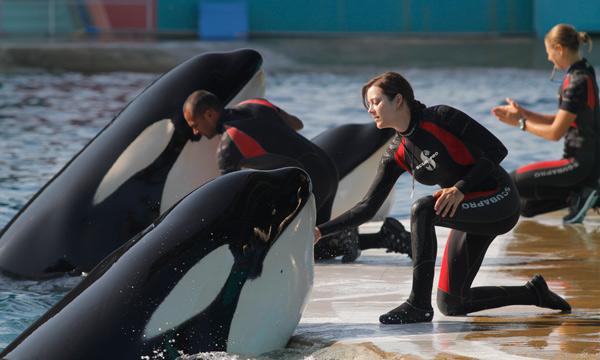 BEV DE OXIDO Y HUESO ORCAS